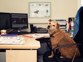 Bramble sitting at desk